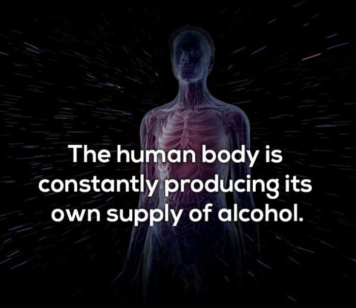 Facts About Booze (10 pics)