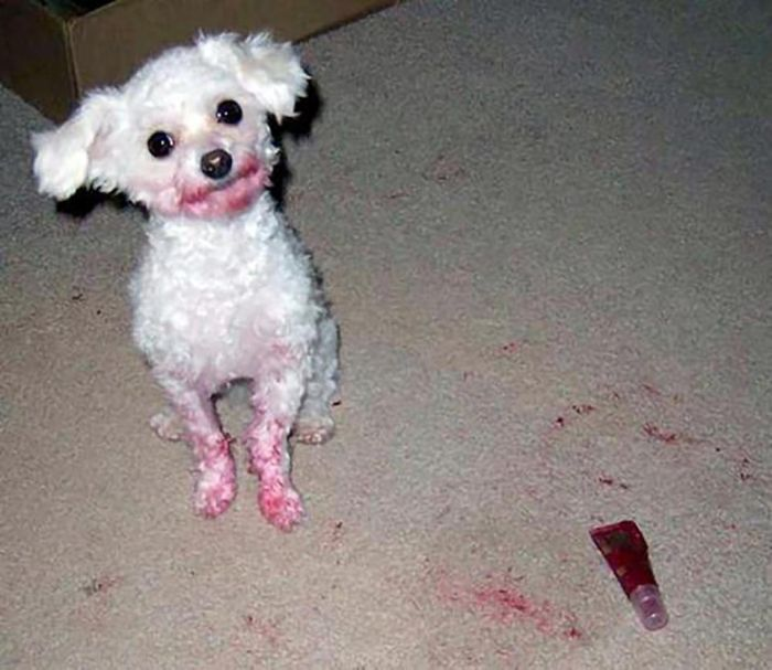 Dogs  Vs Makeup (13 pics)