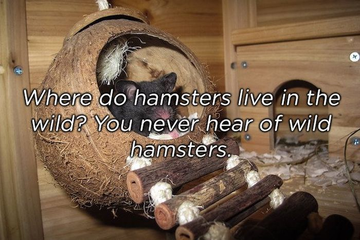 Shower Thoughts (17 pics)