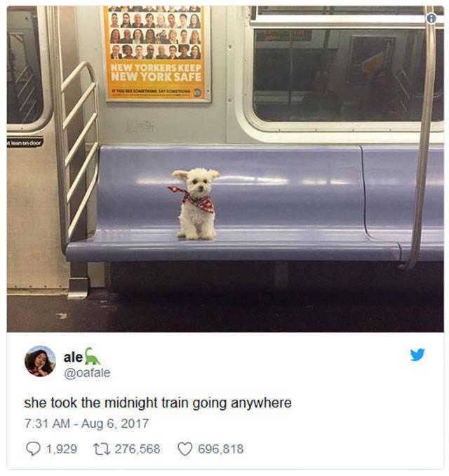 Funny Captions (49 pics)