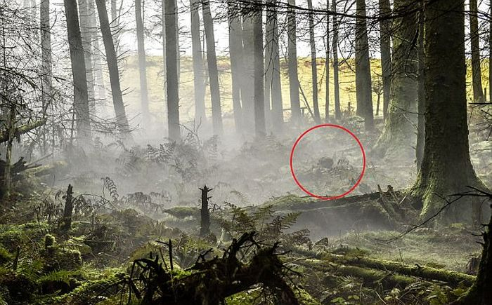 British Army Show Off Their Camouflage Skills (2 pics)