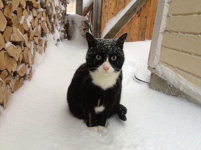 Animals And Snow (25 pics)