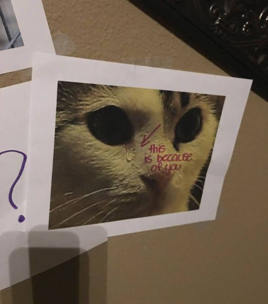 Daughter Finds A Very Creative Way To Get A Cat From Her Father (8 pics)