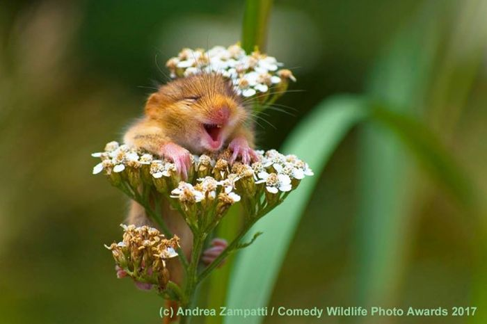 Comedy Wildlife Photo Awards Winners (15 pics)