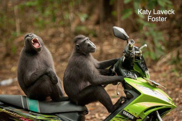 Comedy Wildlife Photo Awards Winners (15 pics)