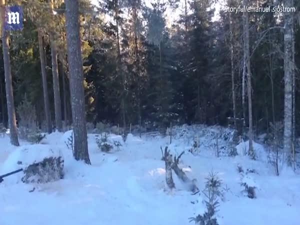 Swedish Man Cuts Down Tree With A Shotgun
