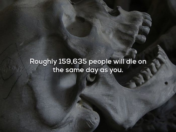 Scary Ad Strange Facts (22 pics)