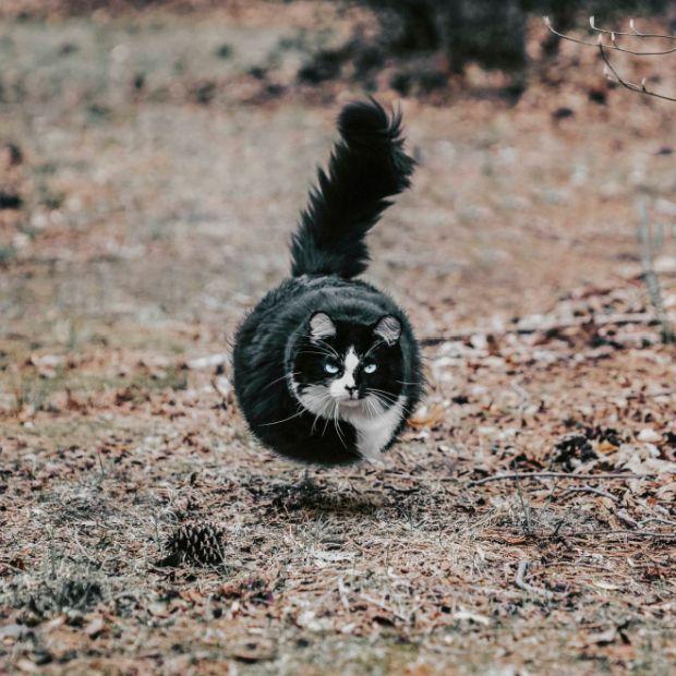 If All Animals Were Round (11 pics)