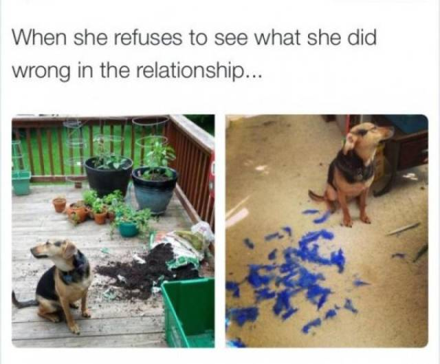 Nothing Will Ever Stop Them From Being Stubborn (23 pics)