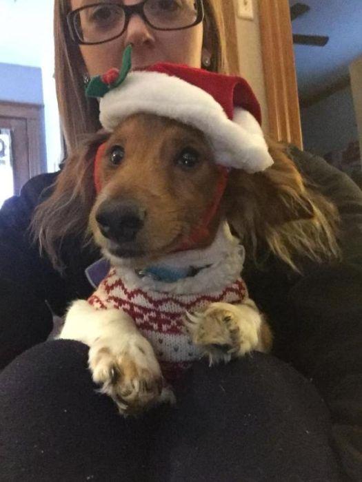 Christmas Pets (34 pics)