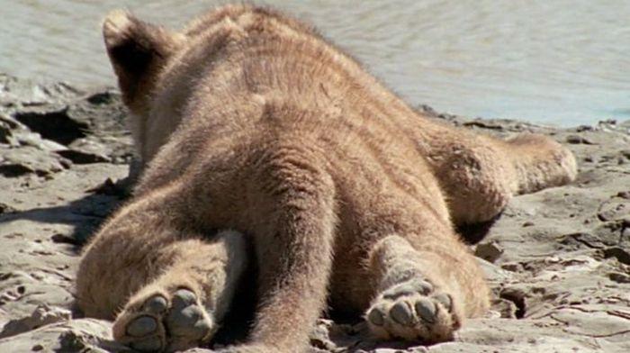 Animals Doing the Sploot (26 pics)