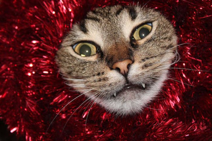 Cats And Dogs Hate Christmas Decorations (35 pics)