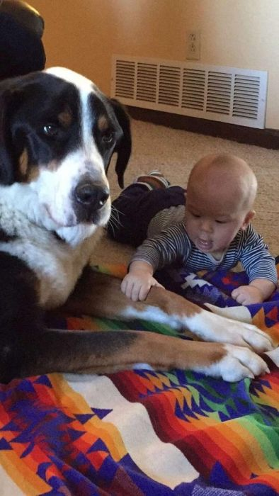 Dogs And Kids (22 pics)