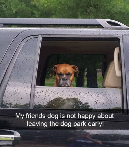 Dogs Always Look Good On Snapchat (25 pics)