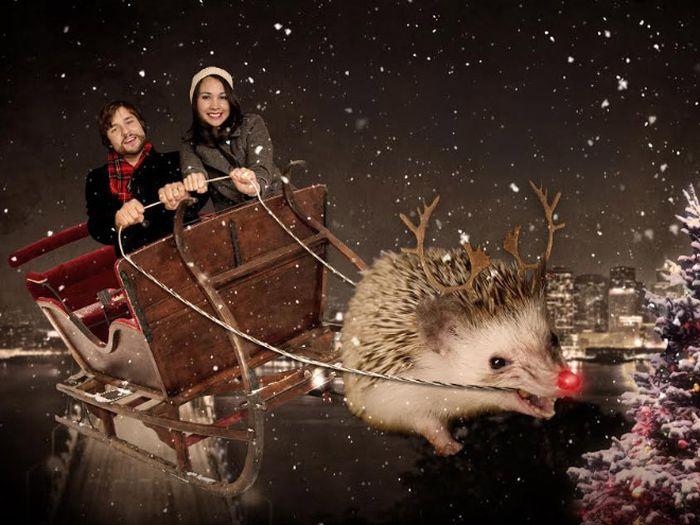 Funny Christmas Portraits With Pets (20 pics)