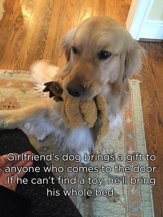 Pets Bring Gifts (24 pics)