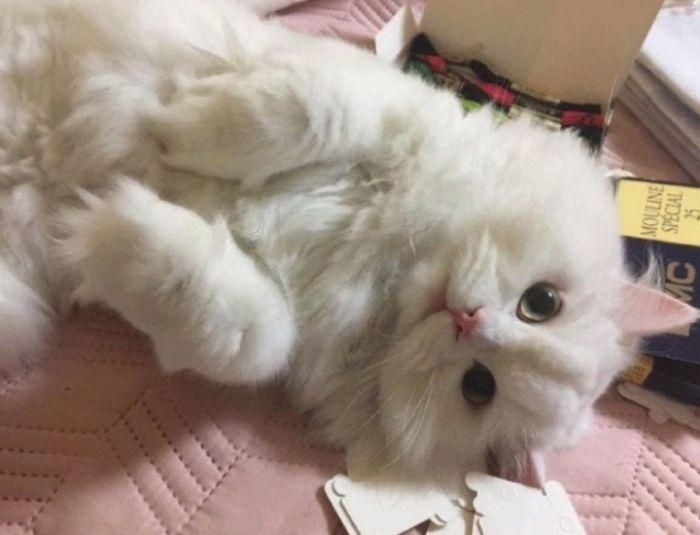 Rescued Cat (7 pics)