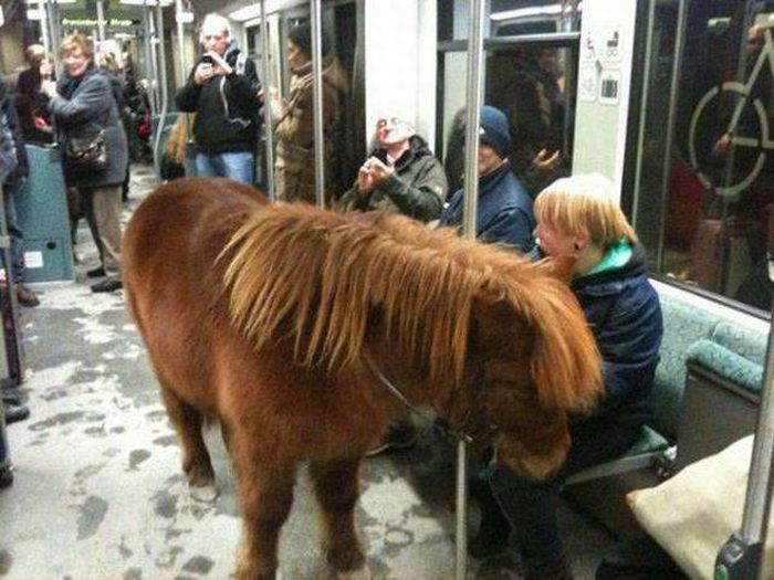 As Seen On The Subway (30 pics)