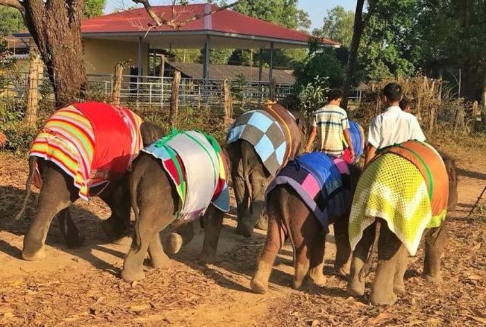 Orphan Elephants Get Homemade Blankets During Myanmar Cold Snap (5 pics)