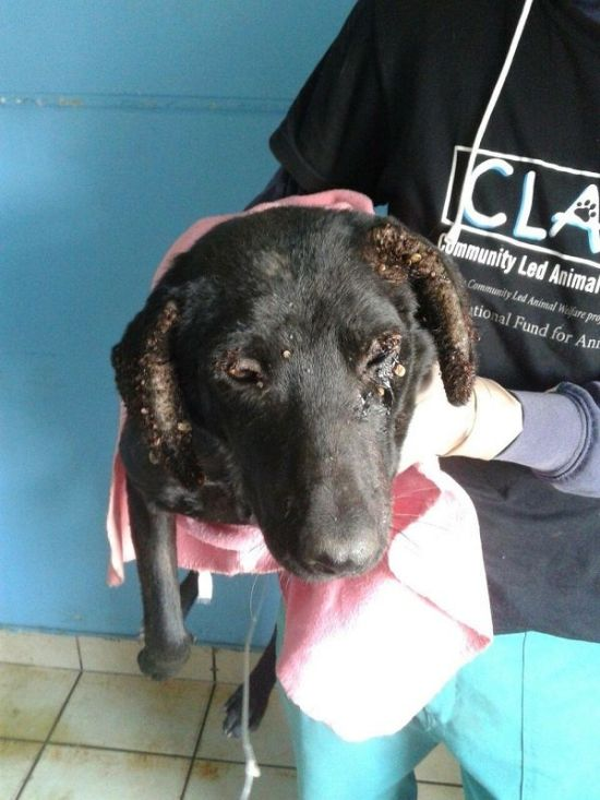 Amazing Transformation Of A Rescued Dog (8 pics)