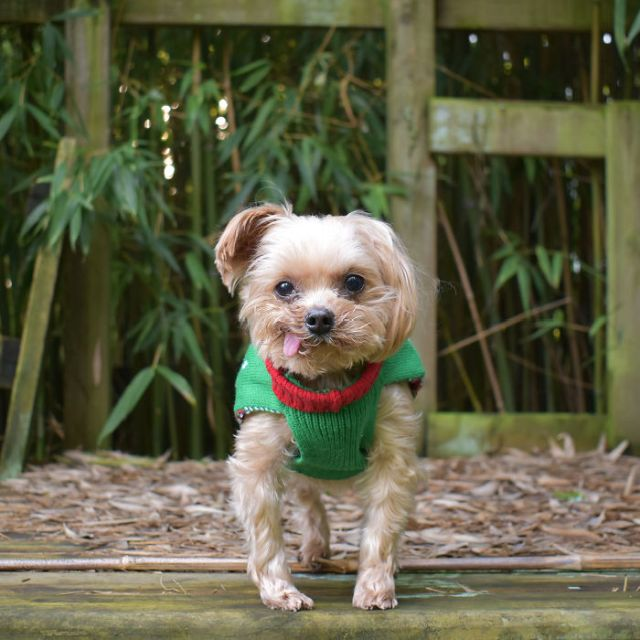 Rescued Puppy From Hong Kong Puppy Mill (18 pics)