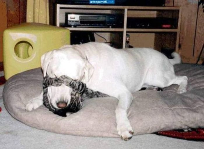 Funny Animals (28 pics)
