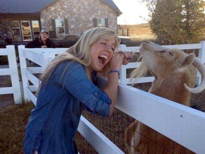 Funny Animals (28 pics)