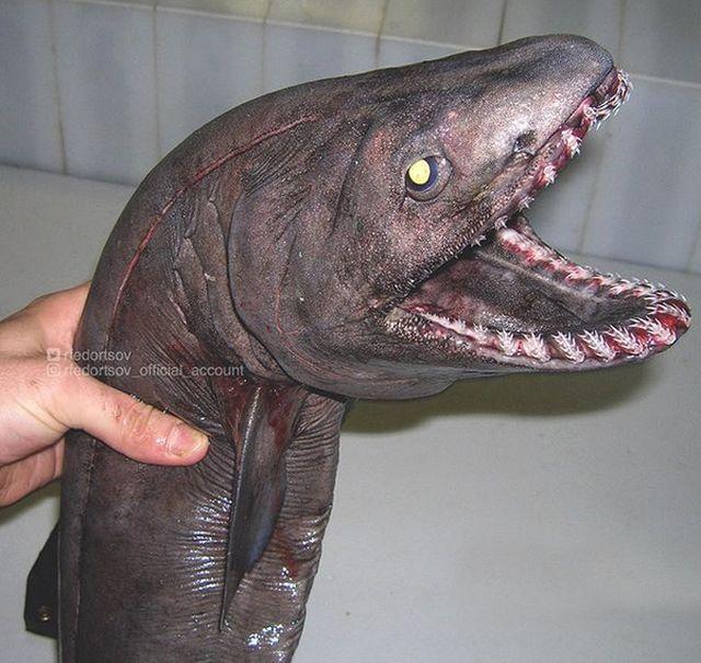 Strange Underwater Creatures (25 pics)