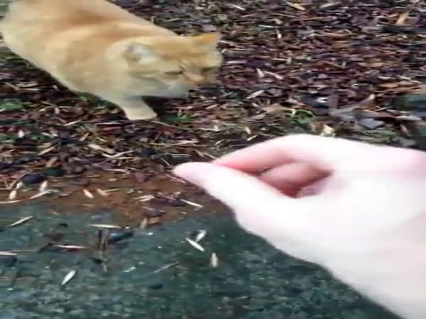 Cat Goes Crazy When Somebody Pets Him