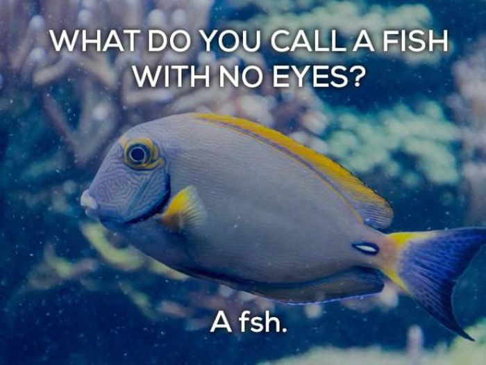 Bad Jokes That Are Actually Funny (17 pics)