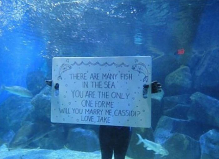 The Most Adorable Marriage Proposals (24 pics)