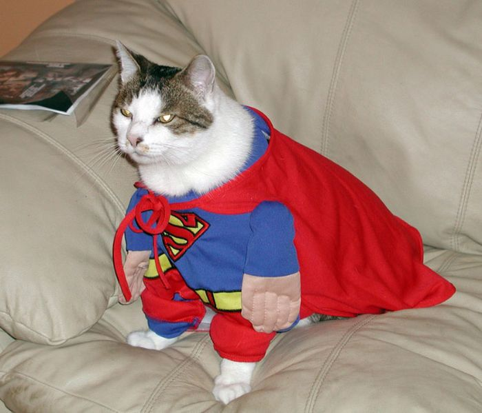 Cats Wearing Capes (16 pics)