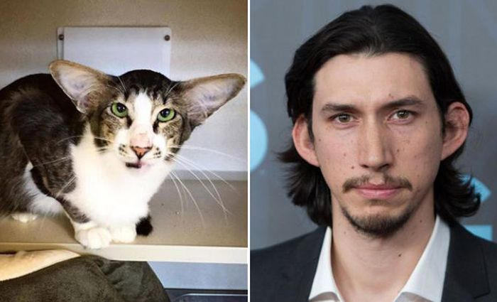 Celebrity Animal Lookalikes (20 pics)