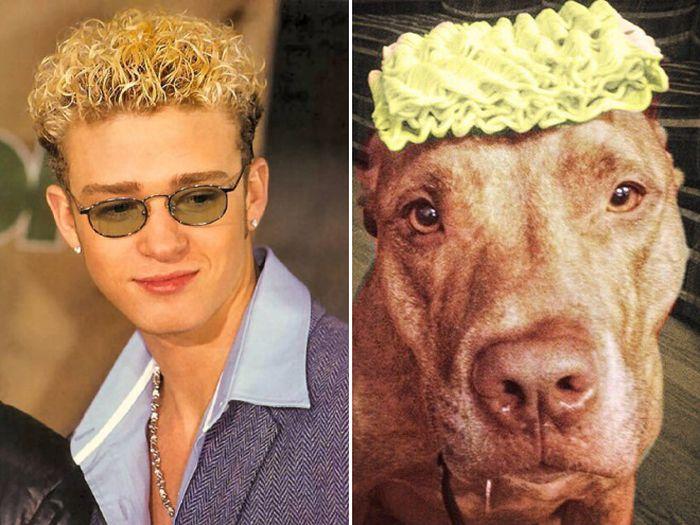 Celebrity Animal Lookalikes (20 pics)