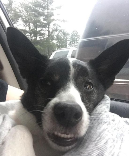 High Animals After The Vet Visit (14 pics)
