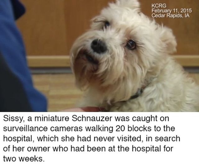 These Dogs Are Heroes (14 pics)