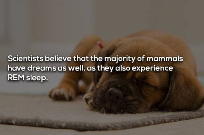 Facts About Dreaming (17 pics)