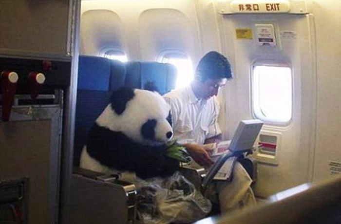Animals On The Planes (26 pics)