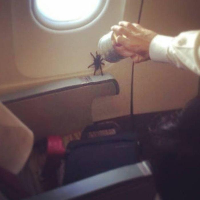 Animals On The Planes (26 pics)
