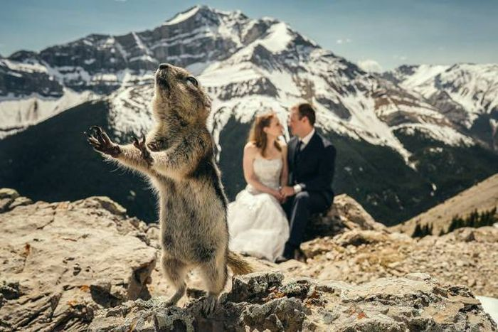 When Animals Spoil Photos (25 pics)