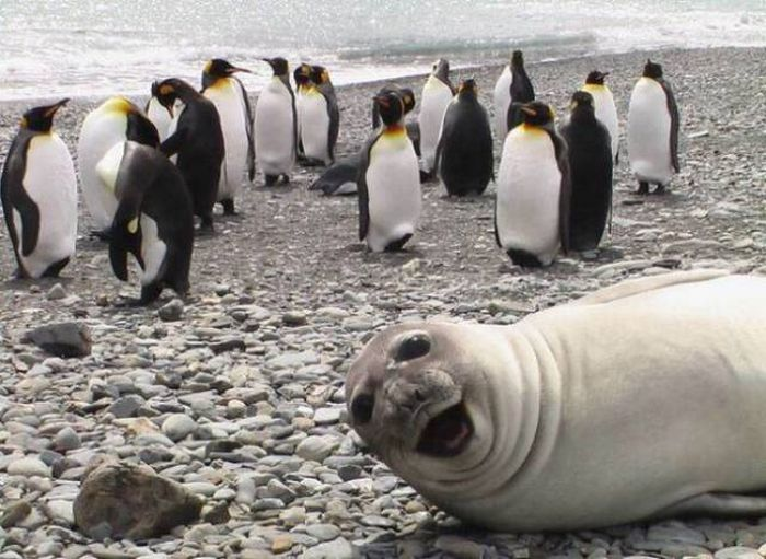 When Animals Spoil Photos (25 pics)