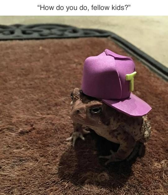 Who Knew Toads Need Hats As Well? (7 pics)