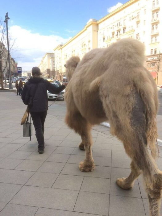 Only in Russia (40 pics)