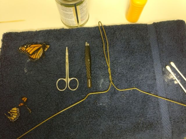 Professional Costume Designer Performs A Wing Transplant On A Butterfly (7 pics)