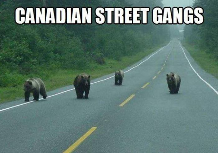 Only In Canada (41 pics)