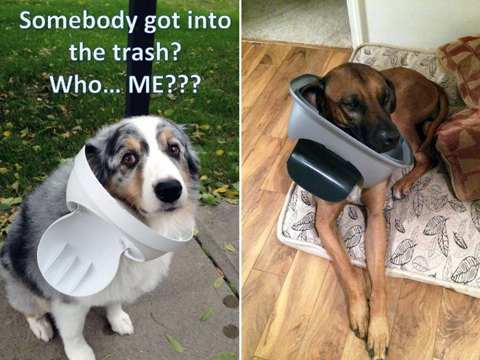 Dogs Can Be Very Bad (17 pics)