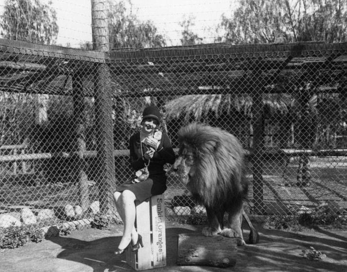 Vintage Photos Of The LA Lion Farm (20 pics)