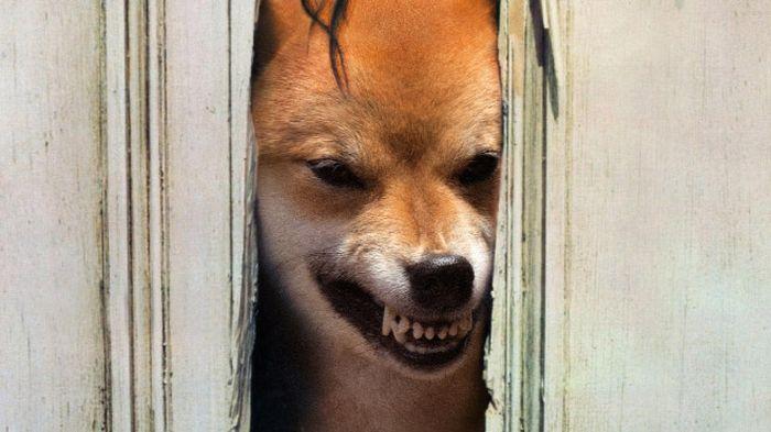 Guy Photoshops His Shiba Inu Into Famous Photos (19 pics)