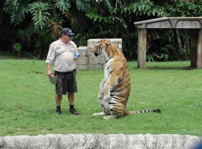 Standing Animals (28 pics)