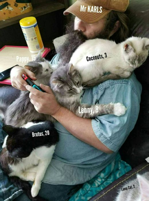 "The Amazing Mr Karls and His Adorable Game/Nap Buddies. Mr Karls is one of the creators of ""Kitty Adventure Rescue League & Sanctuary"" – a feline retirement home located in North Texas (20 pics)"